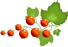 rouge de corinthe Photographie stock libre de droits
