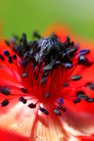 rouge de fleur image stock