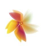 Rouge de fleurs de mouche Image libre de droits