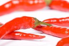 rouge de poivre chaud de /poivron Photo libre de droits