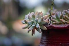 Rouge de pot de fleur avec l'arbre texturisé unique photos libres de droits