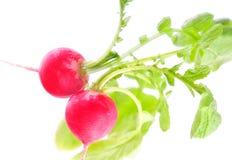 rouge de radis photos stock