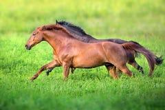 Rouge et cheval de baie élevé en plein air Images libres de droits