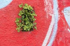 Rouge et vert Images libres de droits