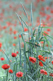 Rouge et vert Image libre de droits