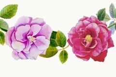 Rouge, fleur de rose de rose Photographie stock