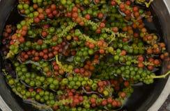 rouge frais de poivre vert Images libres de droits