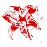 Rouge lilly illustration stock