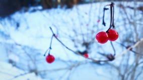 Rouge pendant l'hiver Image stock