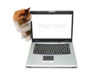 rouge proche d'une chevelure de cahier de chat Photographie stock libre de droits