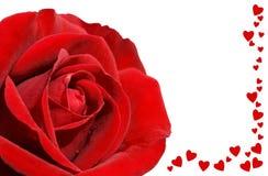 Rouge rose et amour sur le noir Photographie stock