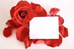 Rouge rose et pétales avec la carte et l'espace pour le texte photographie stock