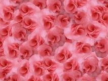 Rouge-rose lumineux de petit géranium de fleurs Fond des fleurs Pour la conception Photos libres de droits