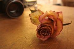 Rouge séchez rose sur la table Image libre de droits