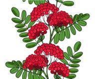 Rouge sans couture Rowan Tree de modèle Brindille d'ornement de sorbe ou ashberry sans fin Feuilles de fond et groupe de baie de  Images libres de droits