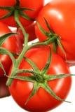 Rouge tomate mûrie grande par vigne Photos stock