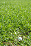 In the rough. Golf ball in lng grass stock photo