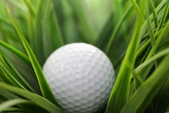 In The Rough. Golf ball in the rough grass adjacent to the fairway on a golf course. Shallow depth of field Stock Image