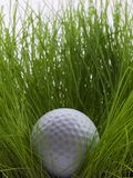 In the rough. Golf ball sitting in tall grass Royalty Free Stock Image