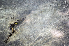 Rough aged natural wood texture.  Royalty Free Stock Photo