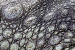 Rough alligators skin texture. Closeup of rough wrinkled green and black alligators skin texture stock photography