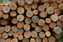 Rough around wooden poles in storage Stock Images