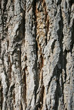 Rough bark Stock Photo