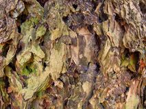 Rough bark closeup Stock Photos