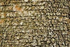 Rough Birch Bark Stock Photo