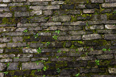 Rough brick wall Stock Images