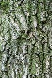 Rough brown bark of the tree. Royalty Free Stock Photo