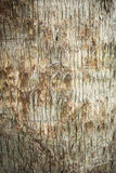 Rough brown palm tree wood bark natural texture background. Royalty Free Stock Photos