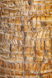 Rough brown palm tree wood bark natural texture background. Stock Photos