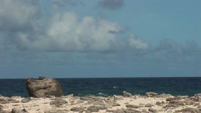 Rough coast on Bonaire stock video