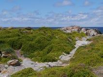 Rough coast with green vegetation Stock Photos