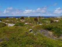 Rough coast with green vegetation Royalty Free Stock Photography