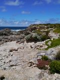 Rough coast with some vegetation. The rocks and colourful plants at the south coast of Kangaroo island in Australia Stock Photo