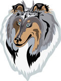 Rough collie vector(blue-merle) Stock Images