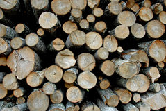 Rough cut logs Stock Photo