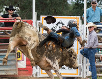 A Rough Day for a Bull Rider Royalty Free Stock Image
