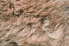 Rough fur Royalty Free Stock Photography