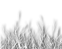 Rough grass Stock Photography