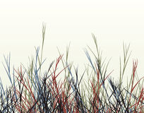 Rough grass Royalty Free Stock Photos