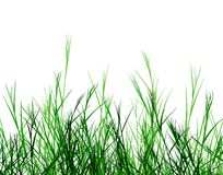 Rough grass. Editable vector foreground design of rough grass Stock Image