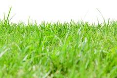 Rough grass Stock Photos