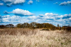 Rough grassland Royalty Free Stock Photo