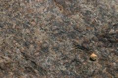 Rough grey stone texture Stock Photography