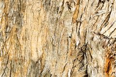 Bark as background or texture royalty free stock photos