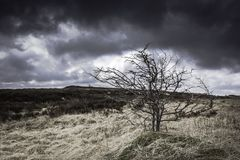 Rough landscape of Peak District National Park,Uk. Rough landscape of Peak District National Park,Derbyshire,Uk.Leafless tree on top of the hill and,heavy Stock Photos