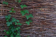 Wicker fence background stock photos